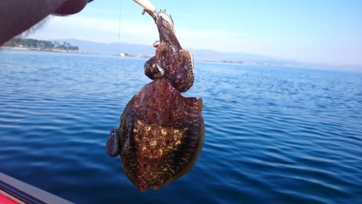 Pesca del Choco en la Ría de Arousa